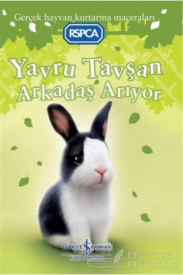 Yavru Tavşan Arkadaş Arıyor